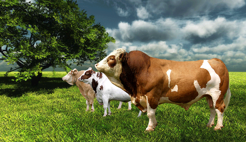 ithal hayvanların maliyeti ile ilgili görsel sonucu